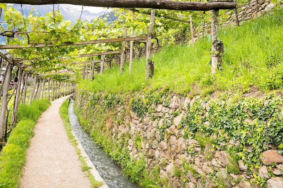 castle-plars-algunder-waal-vines-south-tyrol-gal9