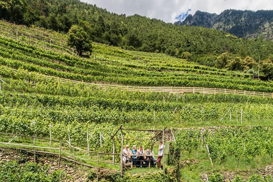 castle-plars-south-tyrol-picnic-vineyard