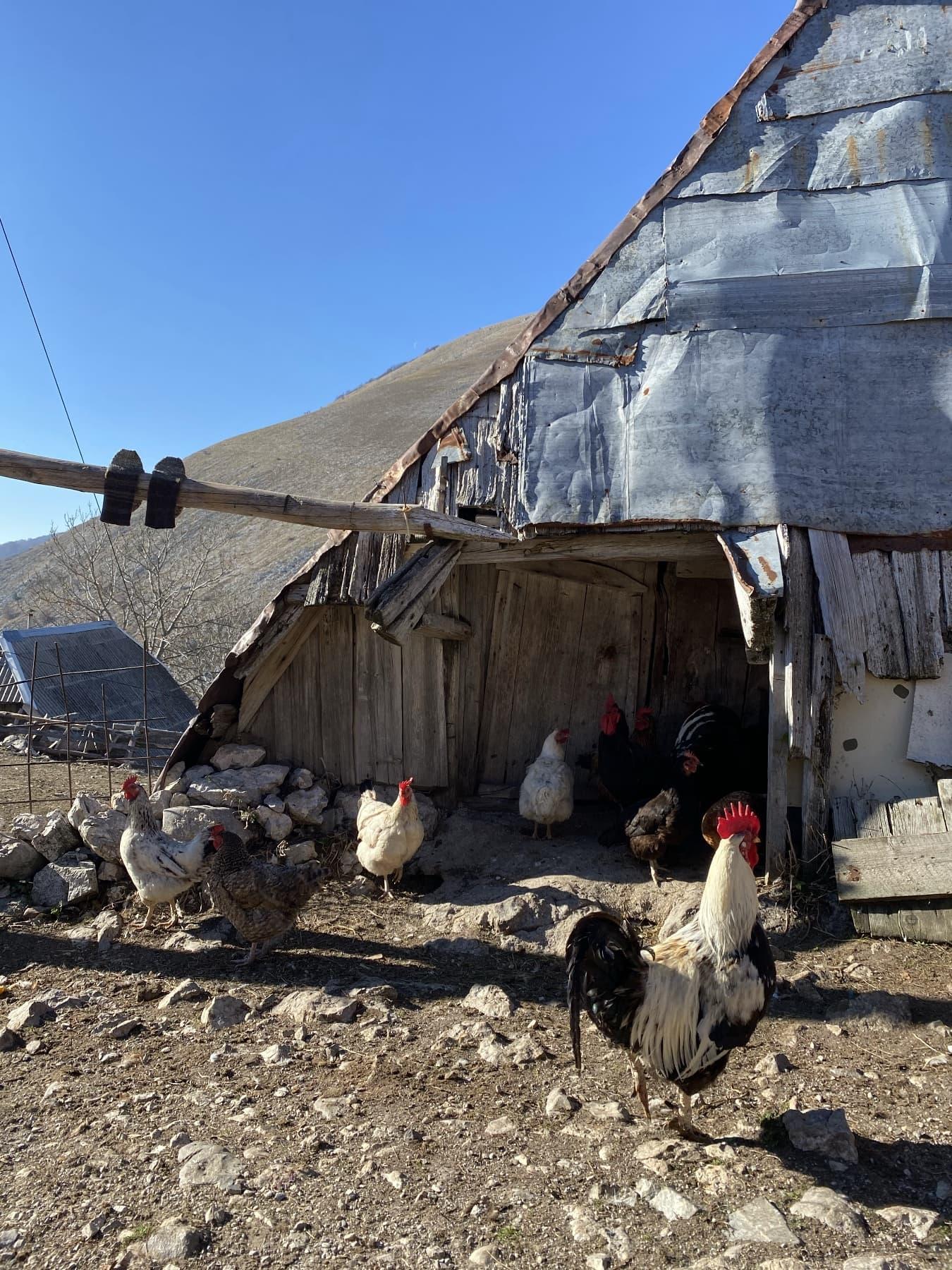 So close to heaven - In The Mountain Village Lukomir 11