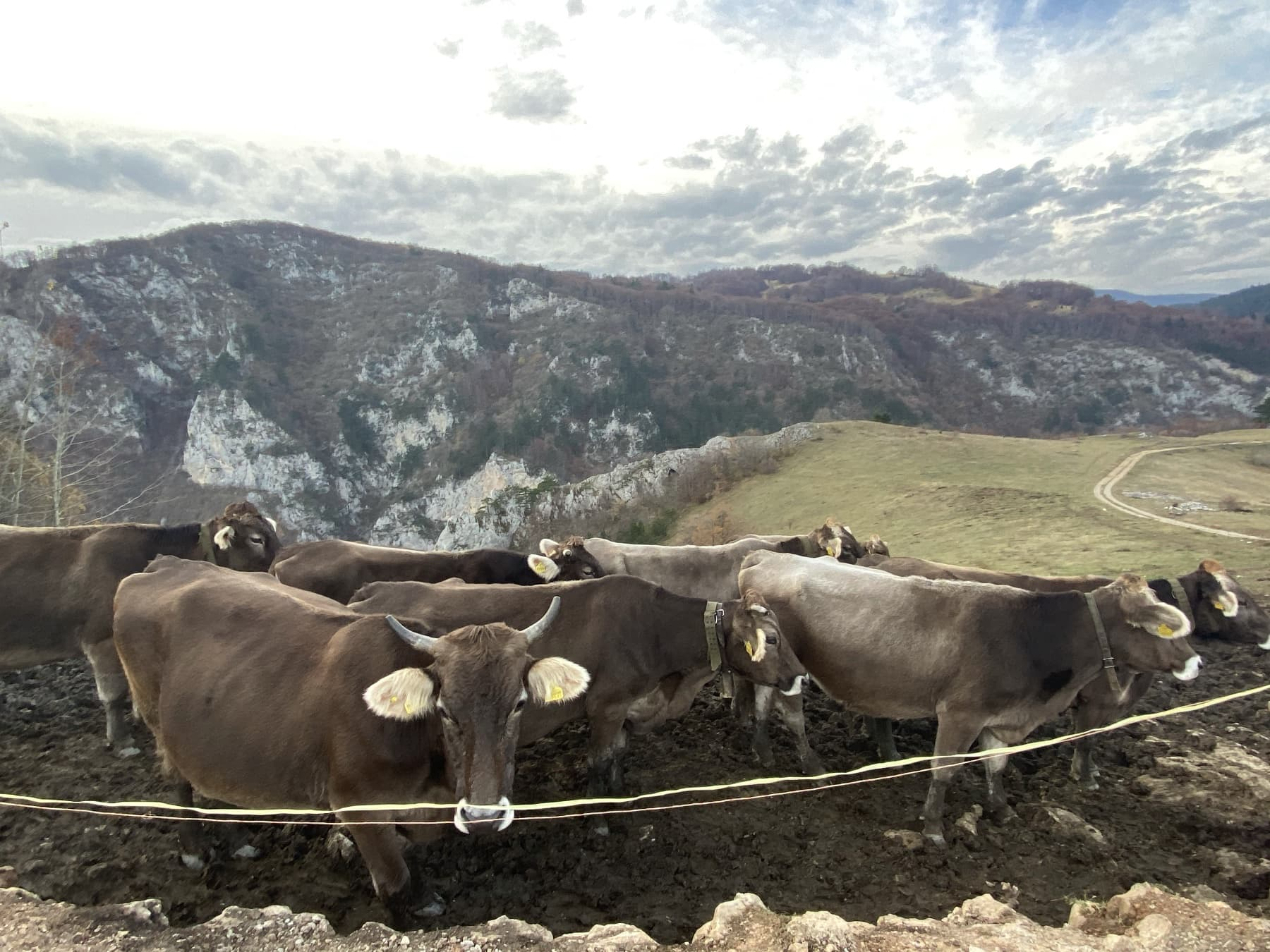Swiss Cheese Made in Bosnia and Herzegovina 17