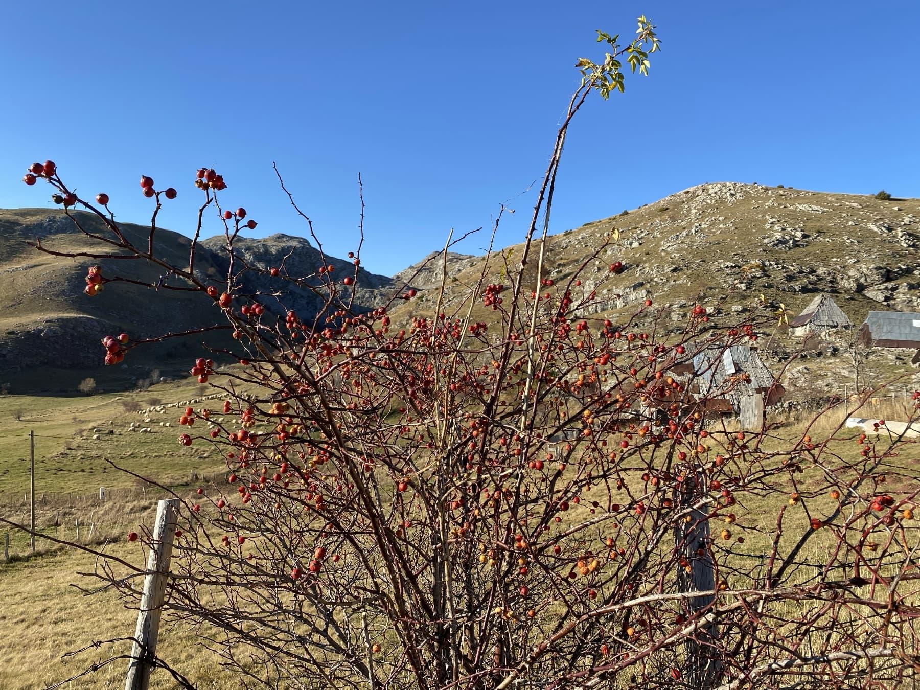 Mountain Village Umoljani - In Search of the Stone Dragon 4