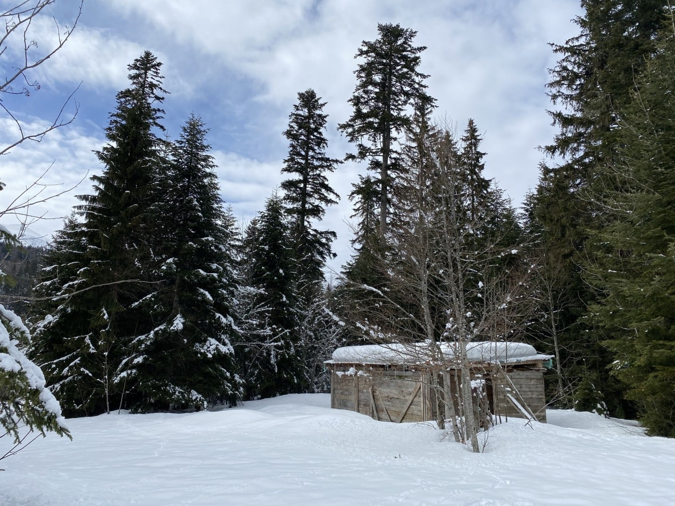 In The Bosnian Mountains - On The Tracks Of Bears And Co. 10