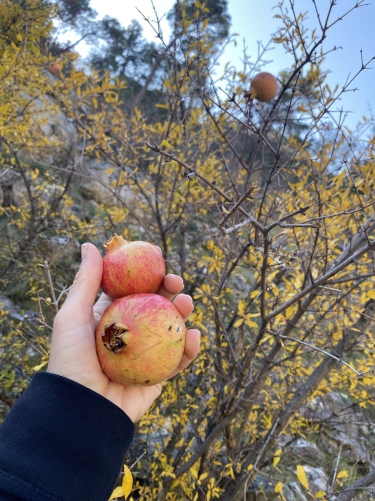 Pomegranates, Figs and Co. - In the paradise of the Balkans 5